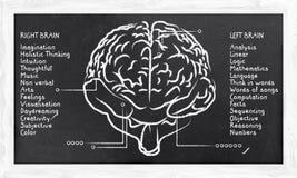 Habilidades para o hemisfério direito e esquerdo ilustração stock