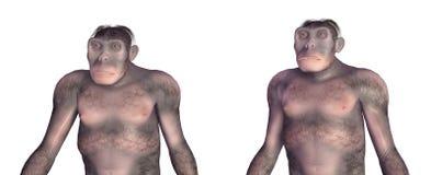 Habilis homo d'isolement sur le fond blanc Photographie stock