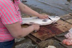 Habillage des saumons Photographie stock