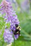 Habitación de la abeja Imagen de archivo libre de regalías