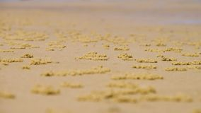 Habitantes de la arena en una playa anaranjada metrajes