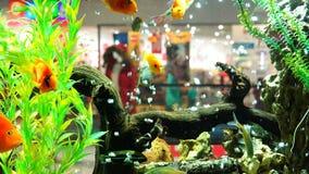 Habitantes de los mamíferos de los mares y de los océanos en el acuario metrajes