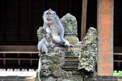 Habitantes del bosque sagrado del mono de Bali Fotos de archivo