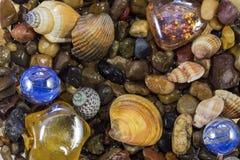 Habitantes marinhos Fotos de Stock Royalty Free