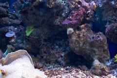 Habitantes marinos Fotos de archivo