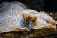 Habitantes marinos Imagen de archivo libre de regalías