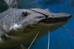 Habitantes marinos Imagenes de archivo