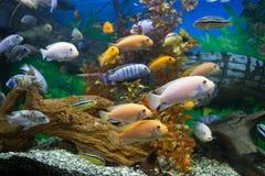 Habitantes marinos Fotografía de archivo libre de regalías