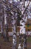 Habitants de forêt - arbres et arbustes 10 photo libre de droits
