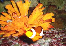 Habitants tropicaux de récif Photographie stock libre de droits