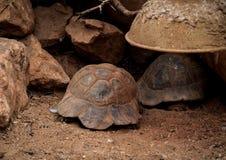 habitat стоковая фотография rf