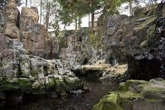 Habitat all'aperto dei pinguini di Magellanic Fotografia Stock