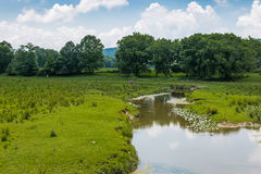 Habitat da preservação da terra fotos de stock royalty free