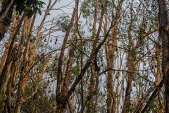 Habitat de renard de vol Photo libre de droits