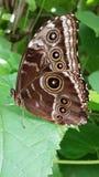 Habitat della farfalla Fotografie Stock