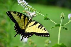 Habitat della farfalla Fotografie Stock Libere da Diritti