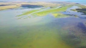 Habitat della zona umida nel delta di Danubio stock footage