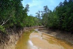 Habitat do córrego dos manguezais Imagem de Stock