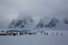 Habitat do pinguim Fotografia de Stock Royalty Free