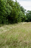 Habitat hay meadow and tall hedge Royalty Free Stock Image