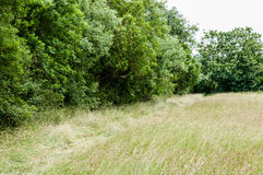 Habitat hay meadow and tall hedge Royalty Free Stock Images