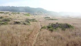 Habitat litoral do norte de Califórnia video estoque