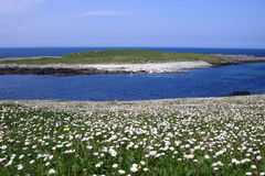 Habitat nas ilhas ocidentais, Scotland de Machair imagem de stock