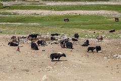 Habitat of Nomad people and their livestock near Tso Moriri Lake in Changtang, Ladakh, India Stock Photo