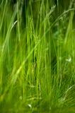 Habitat portrait fine grasses Stock Photos