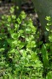 Habitat portrait hedgerow plants Stock Images