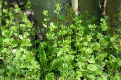 Habitat portrait hedgerow plants Royalty Free Stock Photos