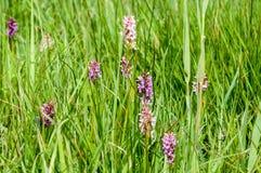 Habitat species rich grassland Royalty Free Stock Photos