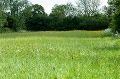 Habitat species rish grassland Stock Photos