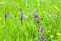 Habitat species rish grassland Royalty Free Stock Images