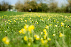 Habitat study wild flower meadow Stock Photos