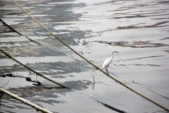 The Habitat of the white crane Royalty Free Stock Photos