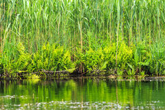 Habitats of the Danube Delta Stock Photo