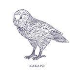 Habroptila de Strigops - Kakapo, perroquet de hibou Illustration de vecteur, oiseau avec le statut de conservation Images stock