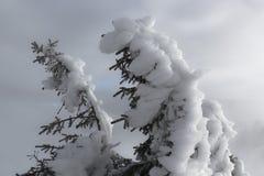 Hacer frente a las condiciones del invierno fotografía de archivo libre de regalías