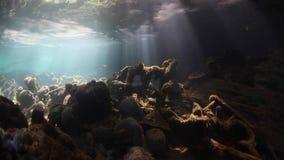 Haces de la luz del sol subacuáticos en laguna del ` s de Palau almacen de video