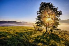 Haces de la salida del sol a través del árbol de niebla Imágenes de archivo libres de regalías