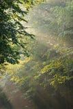 Haces de luz Imagen de archivo libre de regalías