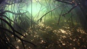 Haces de luz en bosque indonesio del mangle almacen de video