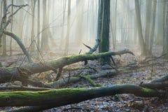Haces de luz sobre el deadwood Imagenes de archivo