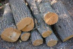 Haces de madera, cubiertas y cáñamo del árbol derribado en la tierra imagen de archivo