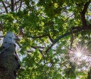Haces de Sun Fotografía de archivo libre de regalías