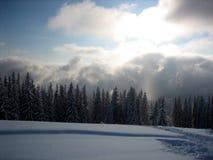 Haces de Sun en bosque nublado del invierno Imágenes de archivo libres de regalías
