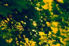 Haces de Sun y hojas del verde imágenes de archivo libres de regalías