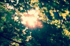Haces de Sun y hojas del verde fotos de archivo libres de regalías