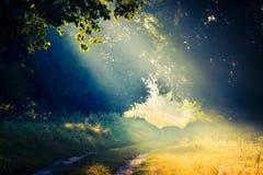Haces del sol en un claro en la madera a través del follaje de árboles en niebla Foto de archivo libre de regalías